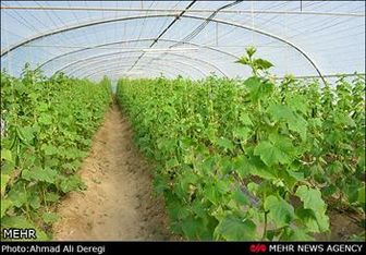 قیمت خرید تضمینی ۲۴ محصول کشاورزی