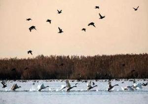 تصویری جالب از نفس کشیدن یک پرنده