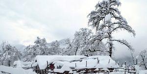 بارش 25 سانتیمتری برف در مازندران