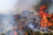 آتش سوزی اینبار در معمولان/ 50 درخت چندصد ساله بلوط با ارزش میلیاردی خاکستر شد