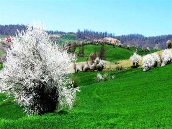 طبیعت زیبای چهار فصل هزارجریب نکا به روایت تصاویر
