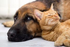 کشتن بی دلیل حیوانات جرم است