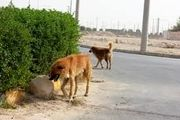 ۵ بیماری که سگها قادرند شناسایی کنند