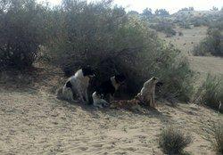 ماجرای آتش زدن ۳۰۰ قلاده سگ در اهواز چیست؟