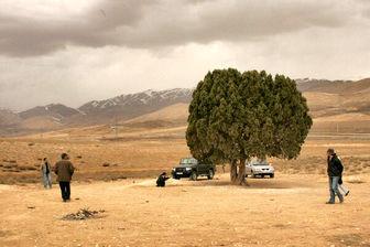 ثبت «تک درخت» به نام عباس کیارستمی