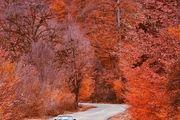 طبیعت پاییزی زیبا در جنگل بهشهر/ عکس