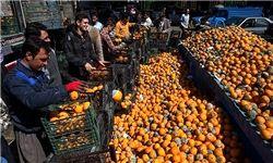 10 هزار تن پرتقال با دلیل بیتجربگی فاسد شد