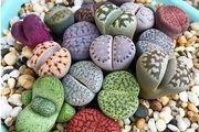 کدام سنگها در خانه به گل تبدیل میشوند؟