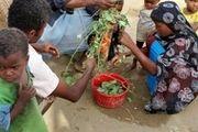 خطر قحطی در انتظار 12 میلیون یمنی