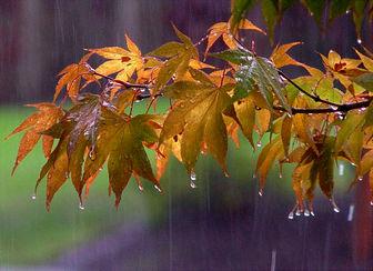 بارش باران پراکنده در ۱۷ استان
