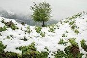 ارتفاعات کندوان برفی شد