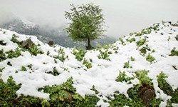 بارش شدید برف در هفته آینده؛ این مناطق را سفیدپوش خواهد کرد