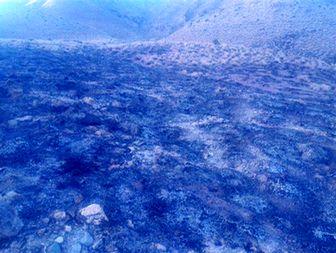 آتش سوزی در یکی از مراتع شهرستان راور+تصاویر