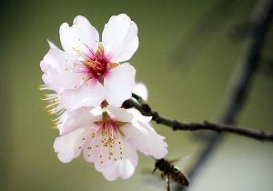 موجودی که نخستین قاصد بهار است+عکس