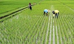 ممنوعیت واردات برنج به تعویق افتاد