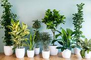 بهترین گیاهان آپارتمانی را بشناسید