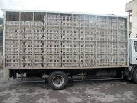کشف بیش از ۲۷ تن مرغ زنده قاچاق در گیلان