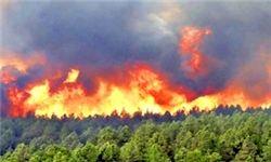 دلیل آتشسوزی جنگلهای بلوط باغملک چه بود؟