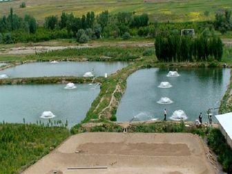آبزی پروران زنجانی دو برابر متوسط کشوری انواع ابزیان را تولید کردند