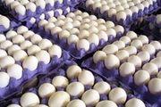 تخم مرغ ارزان تر از نرخ مصوب شد