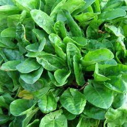 هرآنچه درباره گیاهان خانگی باید بدانید