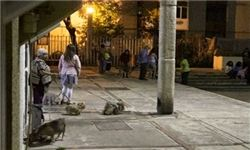 زمین لرزه ۵.۸ ریشتری در ایالتهای مکزیک