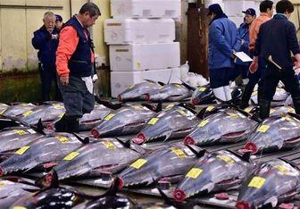 کاهش قیمت کنسرو ماهی تن با آغاز فصل برداشت