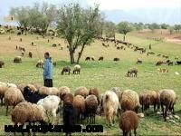 حفر چاههای اضطراری عشایری در شهرستانهای عشایرنشین اصفهان