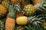 20 کانتینر آناناس وارداتی در انتظار تیک ارزی بانک مرکزی