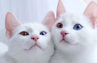 چرا نباید گربه در خانه یا آپارتمان نگهداری شود؟
