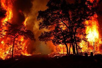 عامل آتش سوزی جنگلهای سپیدان به ۱۱ میلیارد ریال جریمه محکوم شد