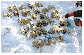 کشف ۵۴ دست بریده انسان در روسیه معما شد!