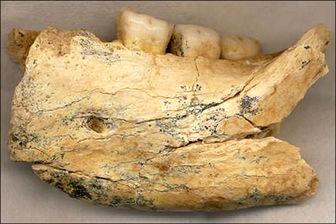 قدیمیترین استخوان انسان + عکس