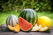 مشخصات طالبی، خربزه و هندوانه سالم و شیرین