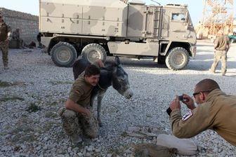 الاغ و قاطرهای ارتش آلمان/ عکس