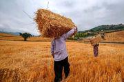 خرید تضمینی گندم از کشاورزان، ۲ هزار و ۵۰۰ تومان تعیین شد