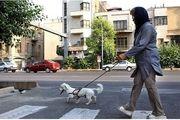 سگ گردانی معضل جدید برخی جوانان/ ماجرای حمله سگ به دختری در لواسان