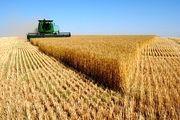 پیش بینی خرید 10 میلیون تن گندم از کشاورزان