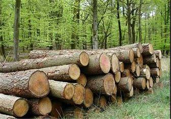 صادرات و واردات چوب آزاد است