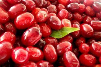 گیاهان ضدپیری را بشناسید