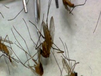 West Nile virus prompts public health emergency in Dallas County, Texas