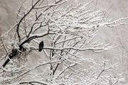 کدام بیماریها در فصل سرما بروز میکنند؟