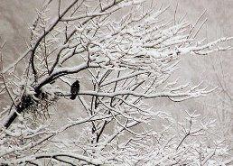 زمستان ها در خانه نمانید تا لاغر بمانید