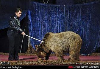 صدور مجوز برای سیرک حیوانات متوقف شود