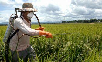 سالانه 27 هزارتن سم در مزارع مصرف می شود