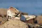 مسابقه عکاسی کمدی حیات وحش /گزارش تصویری