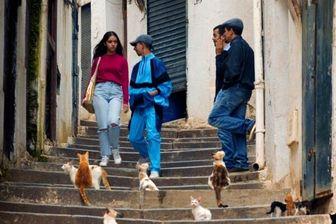 استقبال بی نظیر از فیلم الجزایری نماینده اسکار