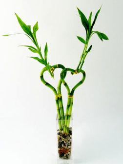 با شاخههای بامبو چاق نشوید!