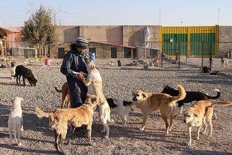 آخرین جزئیات از جمع آوری سگ های ولگرد از بوستان جنگلی سرخه حصار