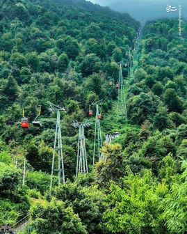 ویلاهایی زشت در جنگلی زیبا/ عکس